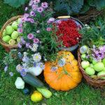 Календарь садовода и огородника на август 2018